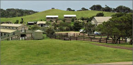 Ace Hi Riding Ranch - Taree Accommodation