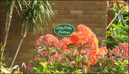 Lillypilly - Taree Accommodation
