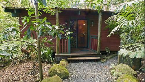 Springbrook Lyrebird Retreat - Taree Accommodation