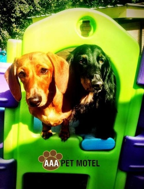 AAA Pet Motel - Taree Accommodation