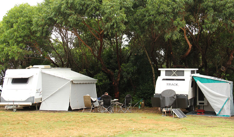 Pretty Beach campground - Murramarang National Park - Taree Accommodation