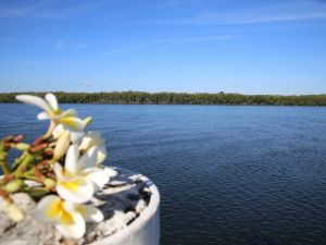 The Fishing Haven Holiday Park - Taree Accommodation