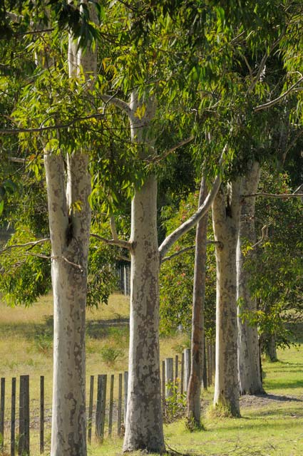 Stringybark Cottages - Taree Accommodation