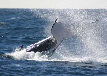 Whale Watching Sydney - Taree Accommodation