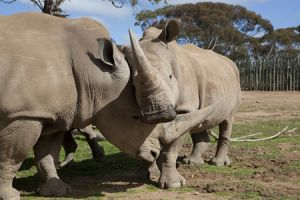 Monarto Zoo - Taree Accommodation