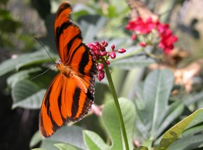 Butterfly Farm - Taree Accommodation