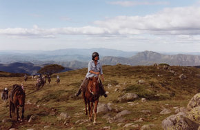 High Country Horses - Taree Accommodation