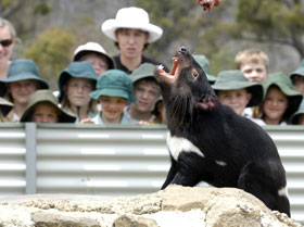 Tasmania Zoo - Taree Accommodation