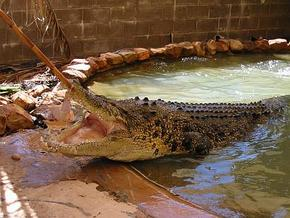Wyndham Zoological Gardens and Crocodile Park - Taree Accommodation
