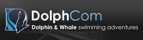 Dolphcom - Dolphin  Whale Swimming Adventures - Taree Accommodation