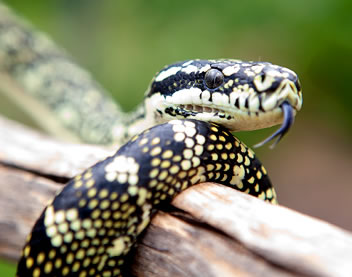 Reptile Encounters - Taree Accommodation