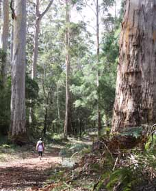 Warren River Loop Walk - Taree Accommodation