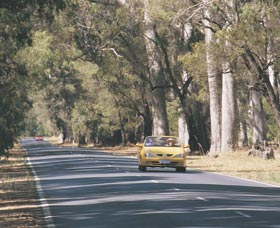 Ludlow Tuart Forest - Taree Accommodation