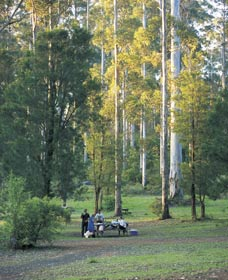 Big Brook Arboretum - Taree Accommodation