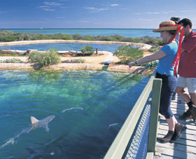 Shark Bay Marine Park - Taree Accommodation