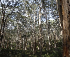 Boranup Karri Forest - Taree Accommodation
