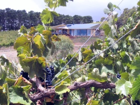 Zimmermann Wine - Taree Accommodation