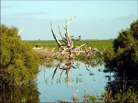 Bool Lagoon Game Reserve and Hacks Lagoon Conservation Park - Taree Accommodation