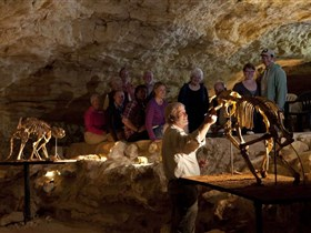 Naracoorte Caves National Park - Taree Accommodation