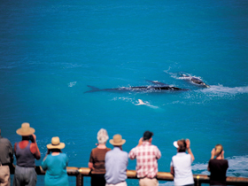 Whale Watching At Head Of Bight - Taree Accommodation
