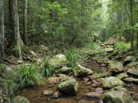 Amamoor State Forest - Taree Accommodation