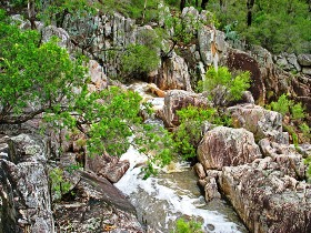 Crows Nest National Park - Taree Accommodation