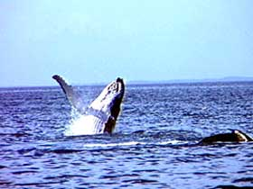 Whale Watching - Taree Accommodation