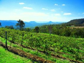 Preston Peak Wines - Taree Accommodation