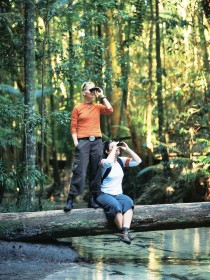 Birdwatching on the Fraser Coast - Taree Accommodation