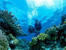 Coral Gardens Dive Site - Taree Accommodation