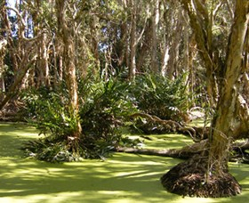 Arkarra Lagoons and Tea Gardens - Taree Accommodation