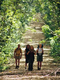 Wet Tropics Great Walk - Taree Accommodation