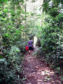 Malanda Falls Rainforest Walk Malanda Falls Conservation Park - Taree Accommodation