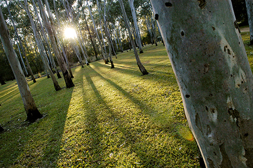 Tondoon Botanic Gardens - Taree Accommodation