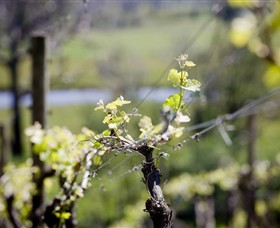 Norton Estate Wines - Taree Accommodation