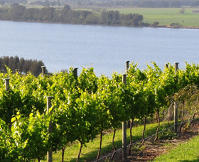 Two Figs Winery - Taree Accommodation