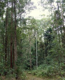 Bongil Bongil National Park - Taree Accommodation
