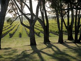 Henry's Drive Vignerons - Taree Accommodation