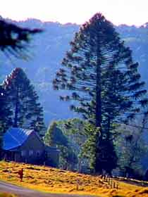 Bunya Mountains National Park - Taree Accommodation