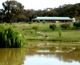 Clearview Alpacas - Taree Accommodation