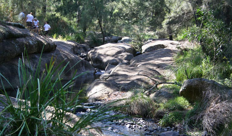 Towarri National Park - Taree Accommodation