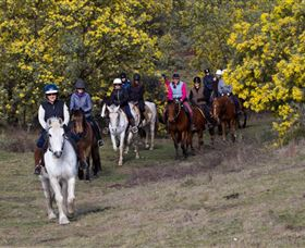 Burnelee Excursions on Horseback - Taree Accommodation
