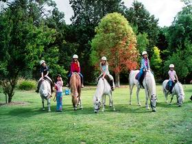 Limestone Coast Horseriding - Taree Accommodation