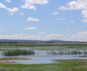 Fivebough Wetlands - Taree Accommodation