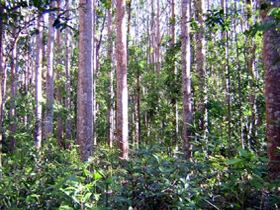 Cathu State Forest - Taree Accommodation