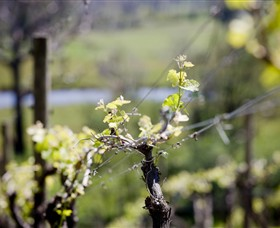 Mountainside Wines - Taree Accommodation