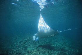 Manta Ray Bay Dive Site