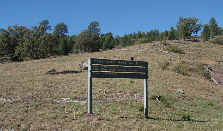 Mount Nangar walking track - Taree Accommodation