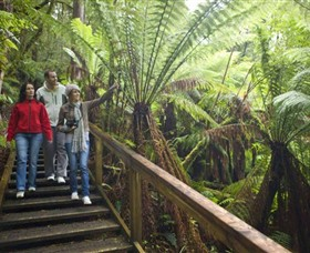 Otway Fly Treetop Adventures - Taree Accommodation