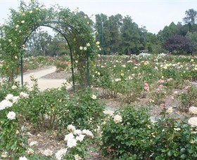 Victoria Park Rose Garden - Taree Accommodation